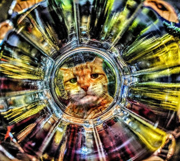 Full frame shot of cat