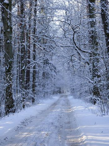 Snow Snow ❄ Snow Trees Path Poland Mazury Krutynia Idyllic Idyllic Scenery Hiking Hiking Trail Winter Wintertime Winter Landscape Landscape Woods Forrest Background One Life Live It Scenics Beauty In Nature Tranquility Nature Calm Winter Trees