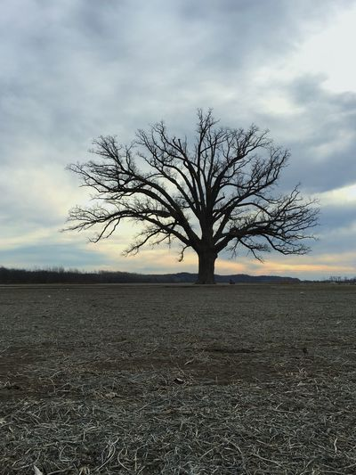 Burr Oak Tree Oak Tree Winter Landscapes With WhiteWall Perspectives On Nature
