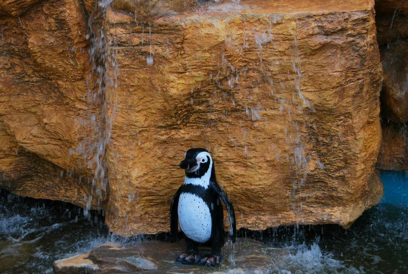 Penguin Island View Bird Animal Themes Animals In The Wild One Animal Animal Wildlife No People Day Nature Outdoors Close-up Perching Mammal NMPhotography