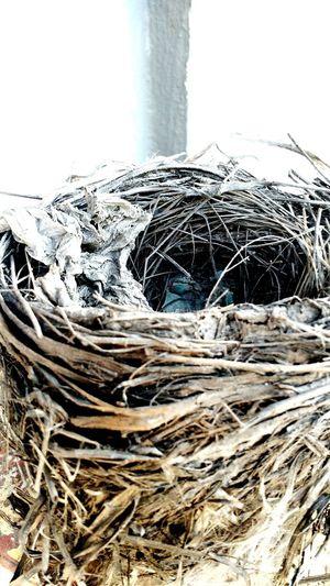 Nature Nido Nido-refugio De La Naturaleza Nido De Ave Indoors  Nest Building Nest