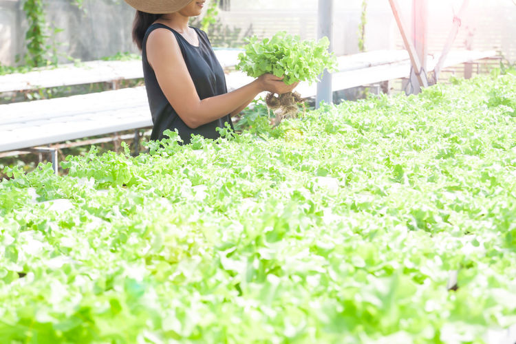Woman holding vegetable in hydroponics farm, green, garden, farm, healthy, food, fresh, health, healthy lifestyle, eating, agriculture, hydroponics, organic, plant, growing, nature, hand, industry, work, healthy food, business, market, marketing, holiday, lifestyle, gardening Outdoors Hairstyle Fragility Freshness Selective Focus Green Color Day Young Adult Adult Leisure Activity Women Young Women Nature Beauty In Nature Lifestyles Growth One Person Flowering Plant Real People Flower Plant Garden Gardening Plant Part Plant Life Growing Happiness Farm Farmland Farm Life Architecture Agricultural Equipment Working Workshop Hydroponics Healthy Lifestyle Healthy Food Healthcare And Medicine Market Market Stall Marketing Copyspace Workspace Health Product Holiday Activity Life