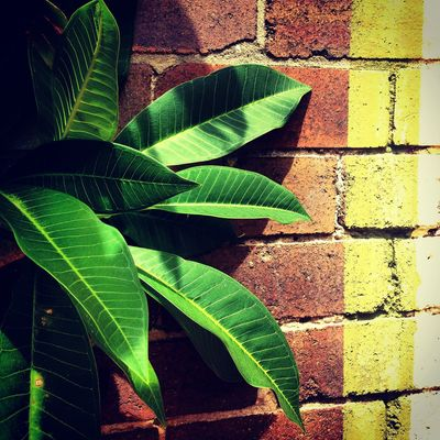 Backgrounds Beauty In Nature Botany Close-up Day Focus On Foreground Green Green Color Growth Leaf Leaf Vein Leaves Natural Pattern Nature No People Outdoors Paint Palm Plant Wall