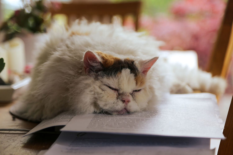 Close-up of a cat resting on a book