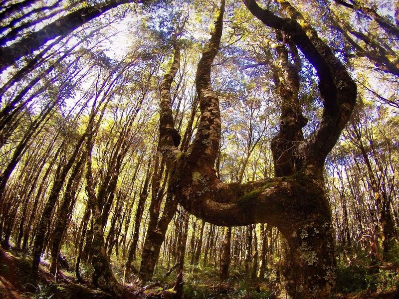 Mt Owen, New Zealand Tree Nature Outdoors Low Angle View Beauty In Nature No People Forest Scenics First Eyeem Photo