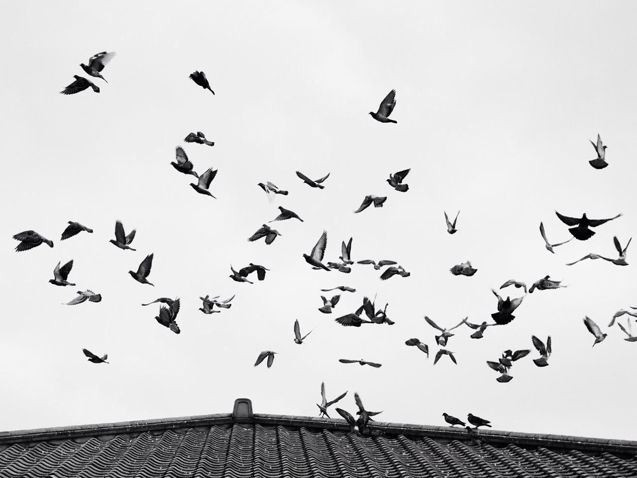 LOW ANGLE VIEW OF BIRDS FLYING OVER THE SKY