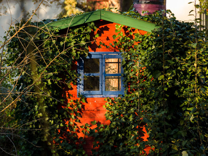 Autumn Colors Built Structure Ivy Nature Outdoors Sunny Day Tree Tree House♥