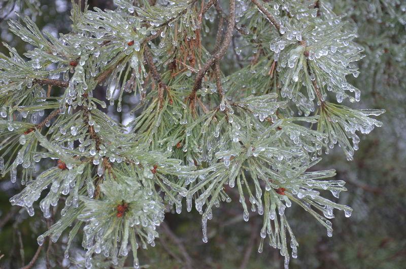 Ice Storm of