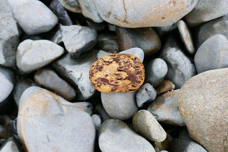 High angle view of wood on rocks