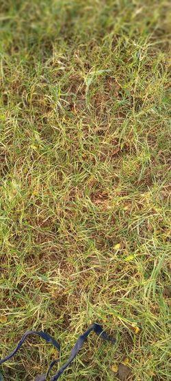Full frame shot of grass on field