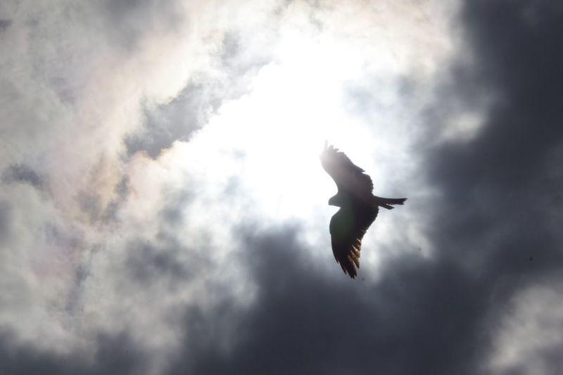 Pentax K-3 鳶 ソレイユの丘 Flying Bird Sky