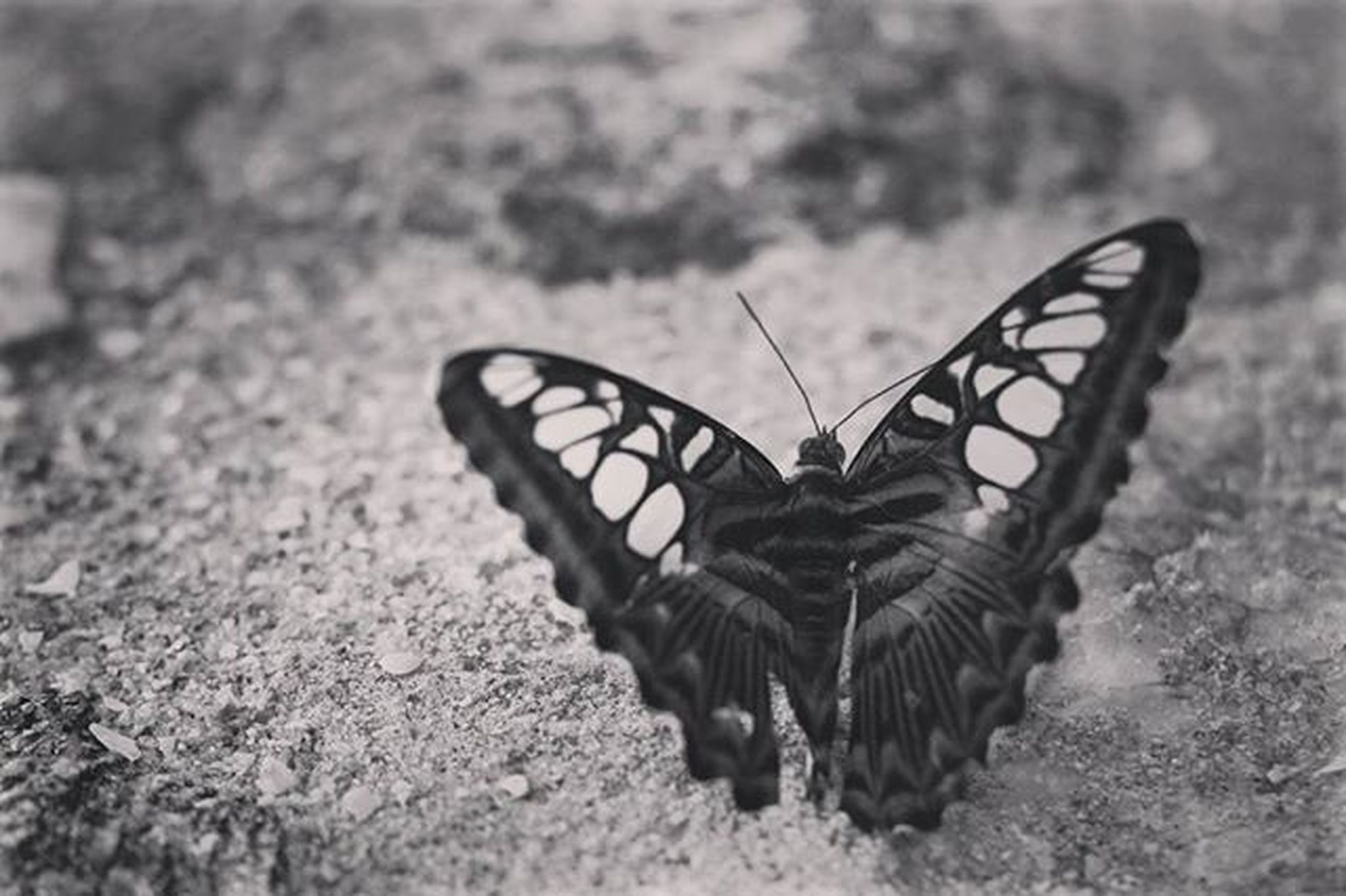 animal themes, one animal, animals in the wild, wildlife, close-up, focus on foreground, insect, animal markings, outdoors, street, selective focus, day, no people, nature, butterfly - insect, high angle view, shadow, sunlight, natural pattern, ground