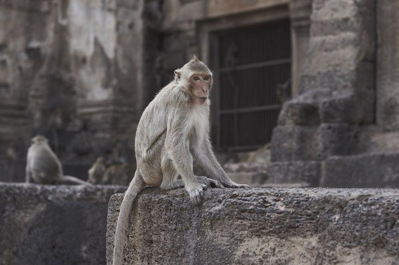 Monkey sitting at historic building