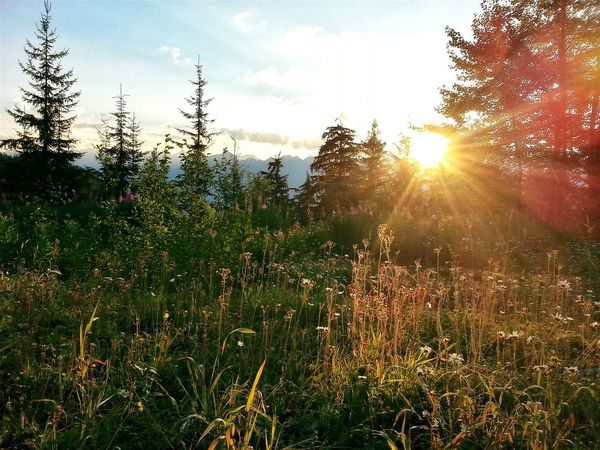 How my day began... Relaxing Sunday Morning Colorful Sky British Columbia Camping Campsite Camping Life Sunrise Sun Flare Sunlit Sunkissed Flowers Sunlit Grass Wildflowers Mountain View Mountains And Sky Outdoor Photography Beautiful Sunrise Mountain Sunset Mountain Sunrise Purcells Kootenay Mountains Kootenay Lake Kootenays Sun Flares Sun Flare Flower Nature Photography Paint The Town Yellow