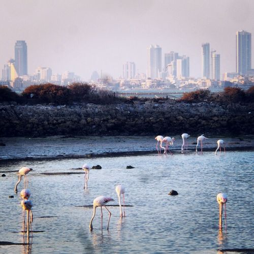 Autumn Colors Flamingos Bahrain Middle East Bahrain. Samsung Galaxy S4 Zoom
