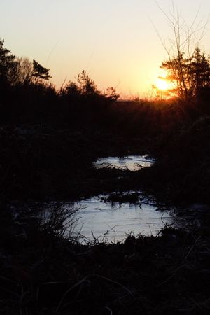 Adventurelands Photography Explorers Connect Frozen New Forest National Park Wintertime Beauty In Nature Cold Temperature Day Frozen Puddle Nature No People Outdoors Plant Reflection Scenics Silhouette Sky Sunrise Tranquil Scene Tranquility Tree Water Winter