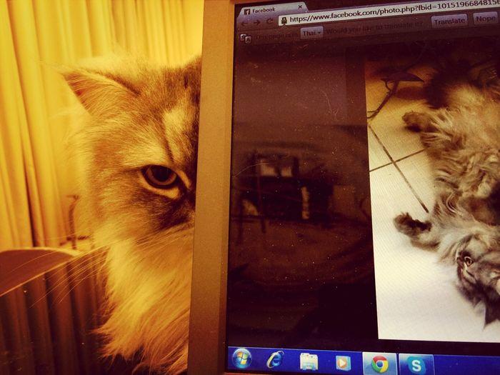 He has the evil plan Cat Evil Cat