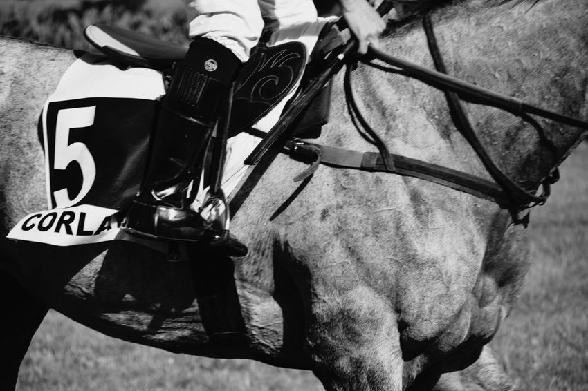 Jockey Horse Racing Animal Photography Sports Photography Horse Photography  Horse And Rider Day At The Races Horse Photography  Blackandwhite Photography Muscles Close-up Horse Body Black And White Friday EyeEmNewHere