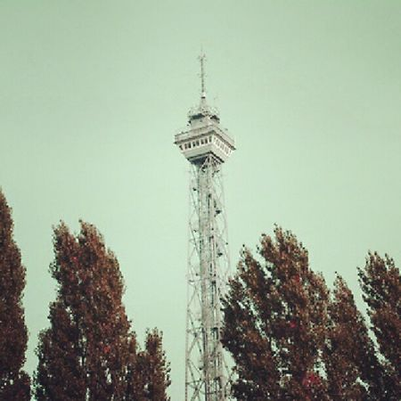 Berlin Funkturm Instamood Wind tree picture photoftheday photooftheday picoftheday mytravelgram instatravel deutschland mtgang iheartmtg nikond600 snapshot surreal colour