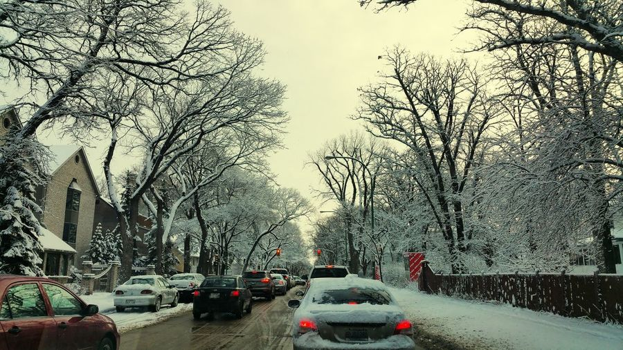 Snowy Trees Morning Drive To Work Hoarfrost Cars Morning Commute Car Traffic Here Belongs To Me The Street Photographer - 2016 EyeEm Awards Mein Automoment The Street Photographer - 2017 EyeEm Awards