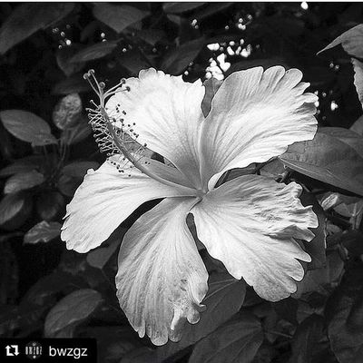 Repost @bwzgz with @repostapp ・・・ . Feature • ___________________________________ Hola. Hi all! We return with one of our favourite pictures tagged in our hastag Bwzgz ___________________________________ PHOTOGRAFER: @kokomyominn Select by : @isgar @rclarimon •••••••••••••••••••••••••••••••••••••••••• SIGUE a @bwzgz y usa el hastag Bwzgz en tus fotos de blanco y negro! Gracias FOLLOW: @bwzgz and use Bwzgz for your beautiful black & white pictures! Thanks •••••••••••••••••••••••••••••••••••••••••• Bnw_madrid Monoart_mx Insta_bw Insta_noir Bwsquare Love_bnw Ir_bnw Rainbow_wall_bw Bnw_demand Rustlord_bnw Bnwmood Mystery_bnw Bnw_addicted Gallery_of_bw Bnw_europe Ig_europe Igworldclub Wu_europe Vivir_to2_bw Insta_bwgramers Igfotogram_4bw bnw_top instabw_ve photo_colection_bw tgif_bnw world_bnw.arts.bnw