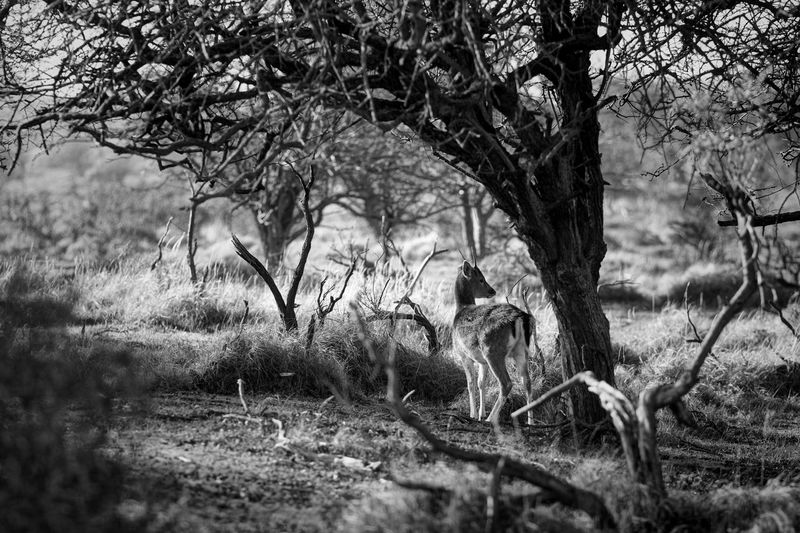 Black And White Monochrome Young Buck Plant Tree Growth Land Nature Day No People Beauty In Nature