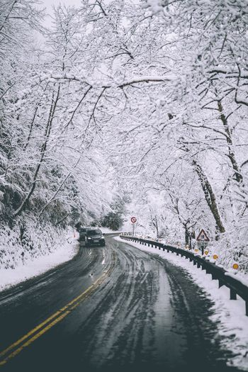 Snow Winter Cold Temperature Road Tree Transportation Nature Car Outdoors The Way Forward No People Day Beauty In Nature