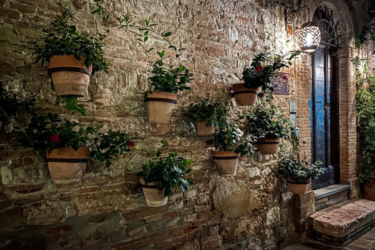 Potted plants against wall of building