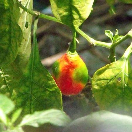 Plants Leaves Vege Veggies Fruit Nature Snapshot