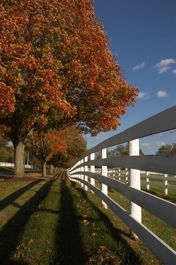 ROLLING FENCES IN THE COUNTRYSIDE Country Road Farm Low Angle Perspective Rural TREE LINED ROW Architecture Autumn Beauty In Nature Change Color Countryside Day Fence Grass Growth Leaf Maple Nature No People Outdoors Pattern Railing Season  Sky Tree
