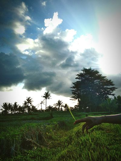 Tree Cloud - Sky Agriculture Field Beauty In Nature Landscape Growth Nature Sky No People Tranquility Social Issues Rural Scene Scenics Outdoors Day Grass Water Irrigation Equipment Freshness