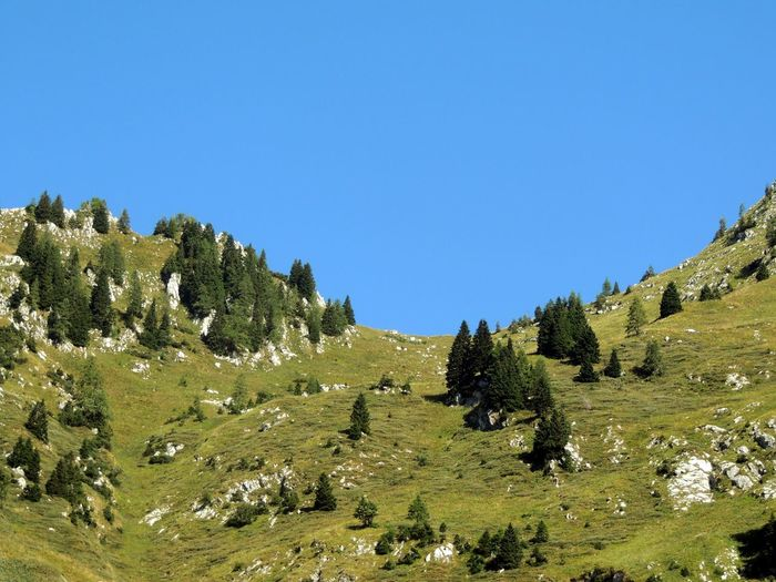 Mt. Krn Slovenia Slovenian Alps Sky Plant Scenics - Nature Beauty In Nature Clear Sky Environment Landscape Copy Space Tranquility Tranquil Scene Nature No People Blue Day Green Color Land Tree Mountain Non-urban Scene Growth Outdoors