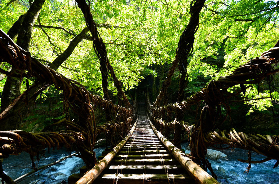 Ancient Hidden Gems  Japan Oku Iy Old Bridge Quiet Moments Streams Travel Beauty In Nature Bridge Double Vine Bridges Forest Greenery Hidden Valley Historical Historical Bridge Iya Valley Mountains Nature No People Relaxing Moments River The Way Forward Tree Valley Been There.
