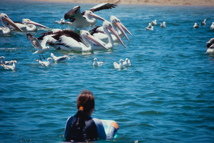 Rear view of woman with water birds swimming in sea