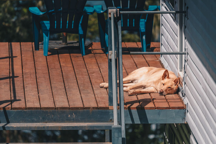 Dog sleeping on wooden terrace