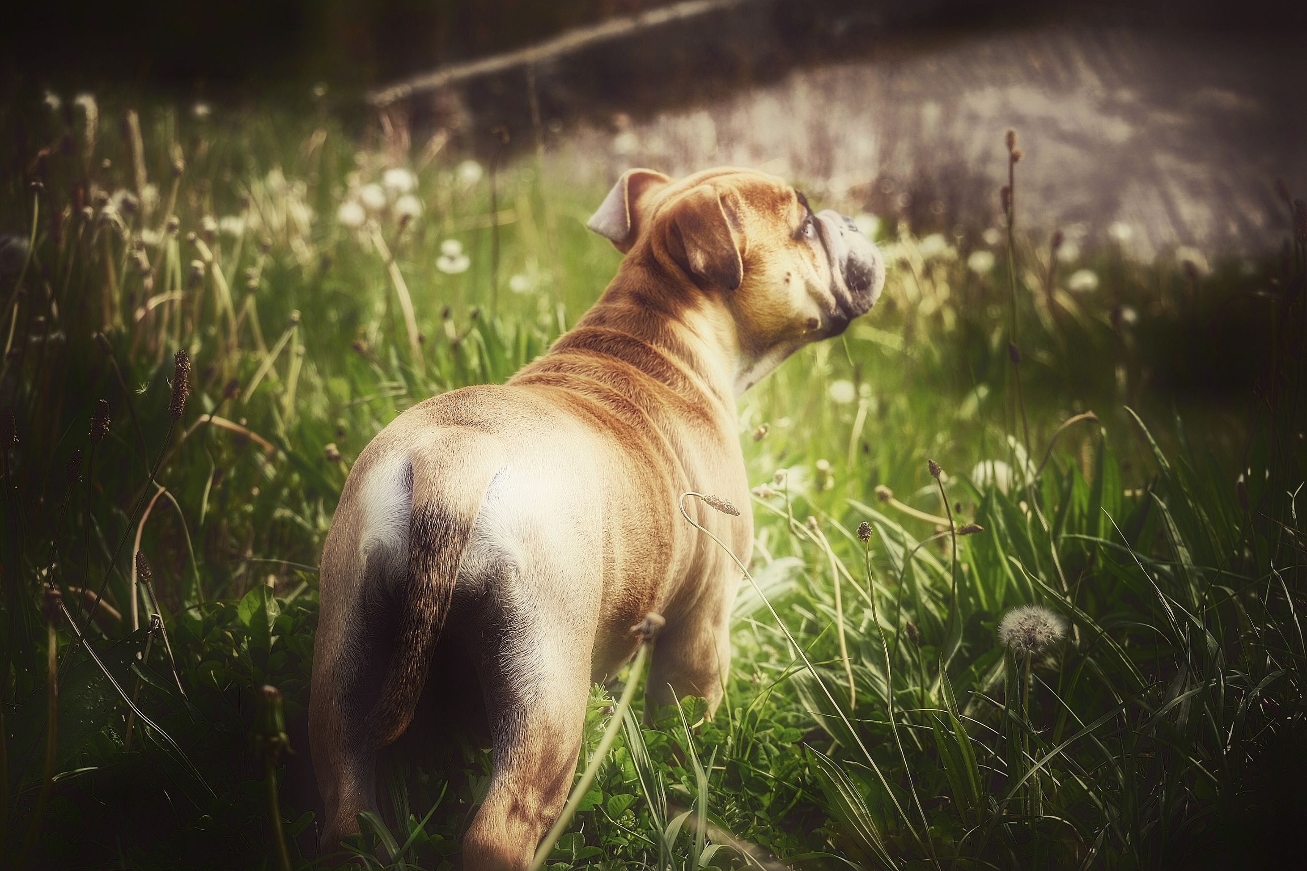 one animal, animal themes, domestic animals, grass, pets, mammal, dog, no people, day, outdoors, nature, close-up