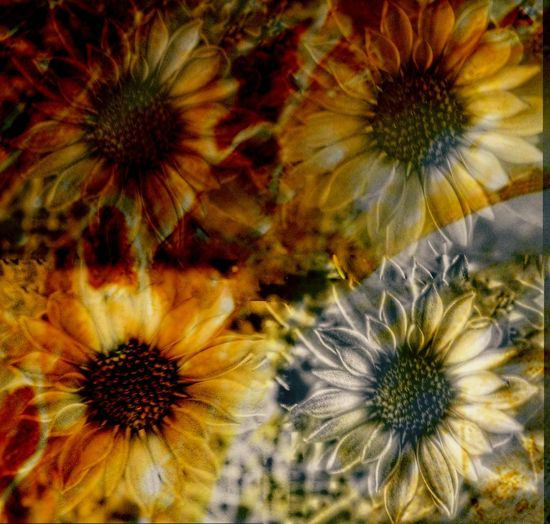 Overlay Editing EyeEmNewHere Abstract Photography Fire Orange Orange Color Flower Flower Head Fragility Petal Close-up Full Frame No People Beauty In Nature Yellow Backgrounds
