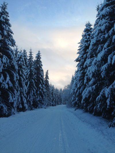 Snow Sport Taking Photos Winter