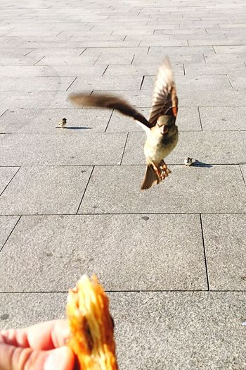 Bird Attack Bird Croissant Breakfast Streetphotography Open Edit