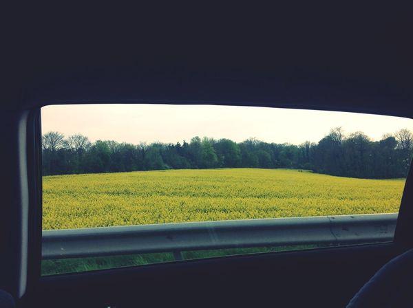 Notre vie est comme un champs, belle et vaste. Enjoying Life