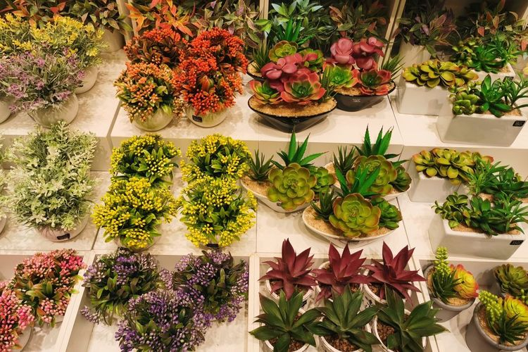 High angle view of potted plants for sale in market