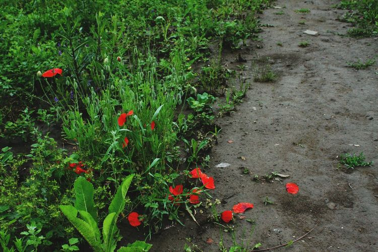 Red flowers growing on plant