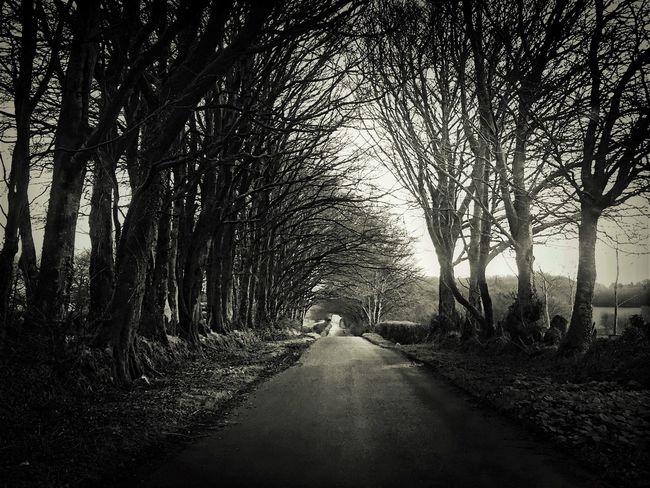 IPhoneography Wandering Black & White Exploring IPhone Photography Fortheloveofblackandwhite Black And White Photography Tadaa Community TreePorn Trees Solitude Journey