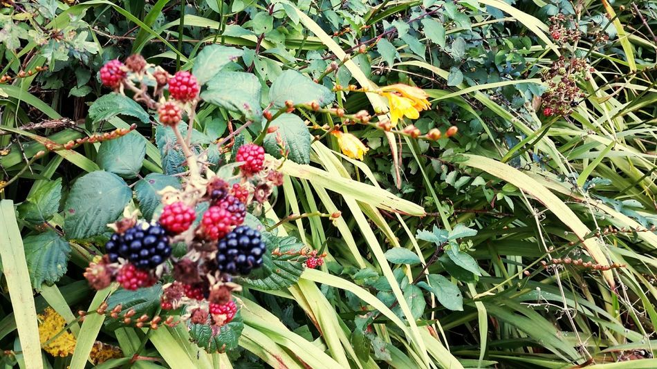 On The Road Back To Nature Flowers,Plants & Garden Colours Flower Nature Walk Leaves Nature Berrys Vibrant