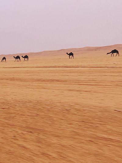 Beauty in the saudi desert