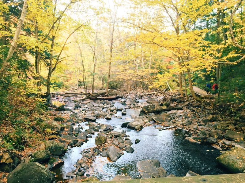Peace And Quiet Quality Time Autumn Colors Hiking Canada Relaxing River Vscocam Fall Beauty Weekend