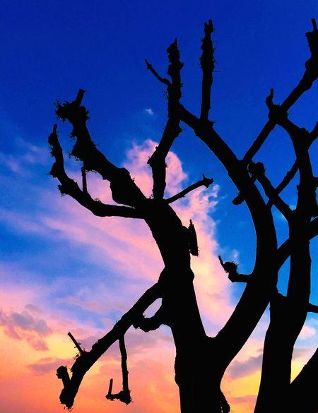 Le mani dell'albero hanno le unghie sporche di azzurro a furia di scavare dentro il cielo (Fabrizio Caramagna) Red&blue Sky And Trees Twilight Sky Tree And Sky Albero Tramonto