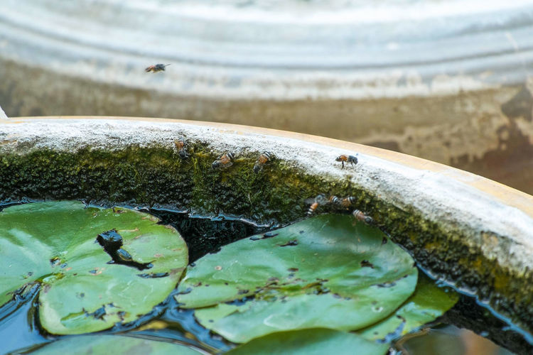 Close-up of crab in water