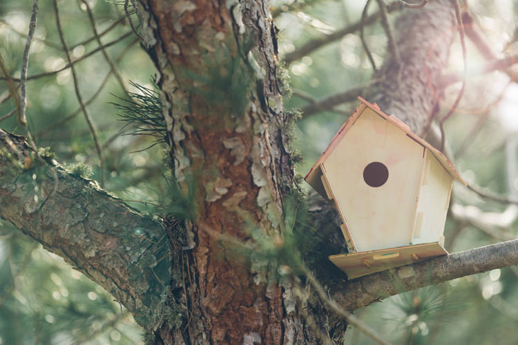 Close-up of birdhouse on branch
