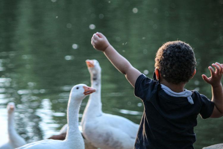 Rear view of boy against ducks in lake